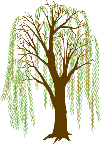 Salix clipart picture Free Willow Leaf Cliparts, Download Free Clip Art, Free Clip ... picture