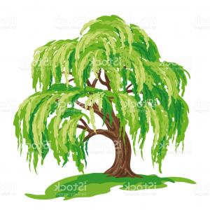 Salix clipart picture free stock Png Weeping Willow Tree Salix Alba Wall Decal Clip Art ... picture free stock