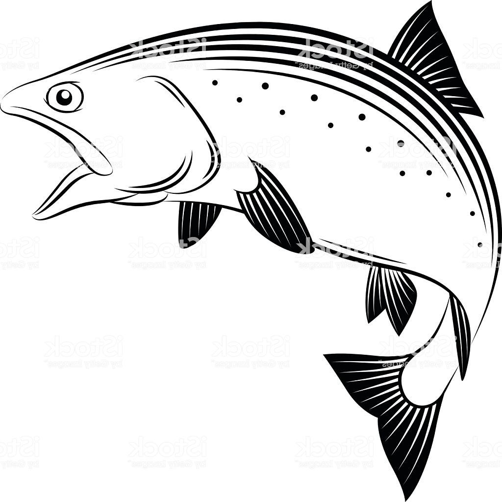 Salmon clipart line drawing picture black and white Salmon Drawing Image at PaintingValley.com | Explore ... picture black and white