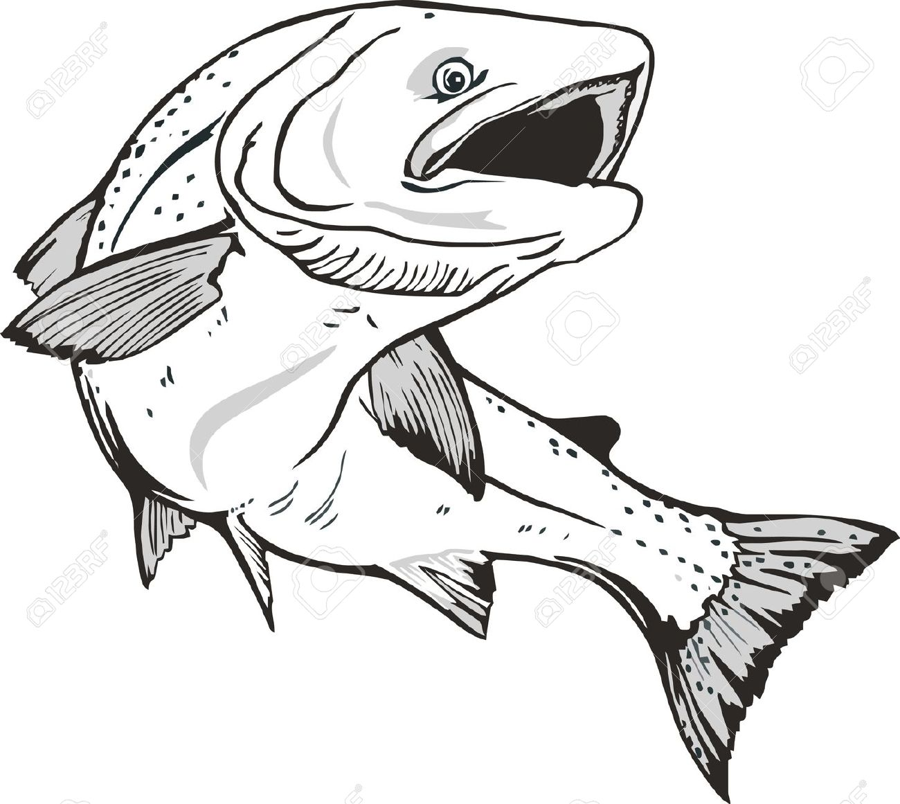 Salmon fish clipart free picture stock salmon: Salmon fish | Clipart Panda - Free Clipart Images picture stock