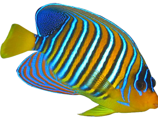 Saltwater fish clipart picture stock Marine Fish Clipart angle fish 12 - 650 X 564 | Dumielauxepices.net picture stock