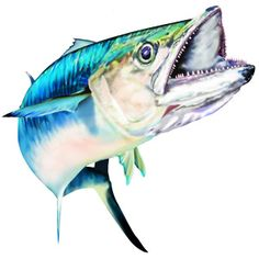 Saltwater clipart banner library library 47 Best Saltwater Sport Fish Illustrations & Clipart images ... banner library library