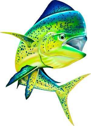 Saltwater clipart png download Pin by Spirit Graphix on Saltwater Sport Fish Illustrations ... png download