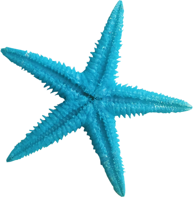 Sea star clipart turquoise png library stock ldw_UnderPalmTree_seastar-blue.png | Pinterest | Starfish, Clip art ... png library stock
