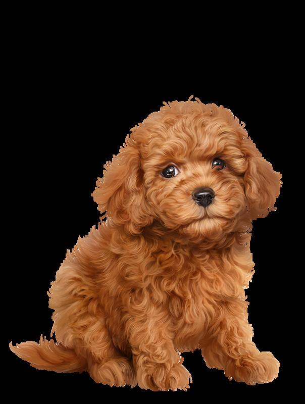 Santa hairy puppy clipart jpg library download Pin by Veronika Bubanj on Cute animals | Dog paintings ... jpg library download