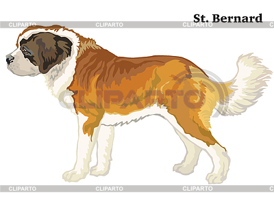 Santa hairy puppy clipart svg freeuse stock Bernard | Stock Photos and Vektor EPS Clipart | CLIPARTO svg freeuse stock