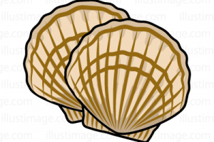 Scallops clipart picture royalty free stock Scallops clipart 1 » Clipart Portal picture royalty free stock