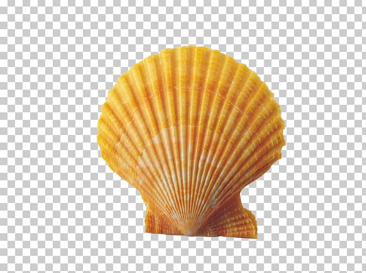 Scallops clipart picture royalty free download Seashell Conch PNG, Clipart, Clams Oysters Mussels And ... picture royalty free download