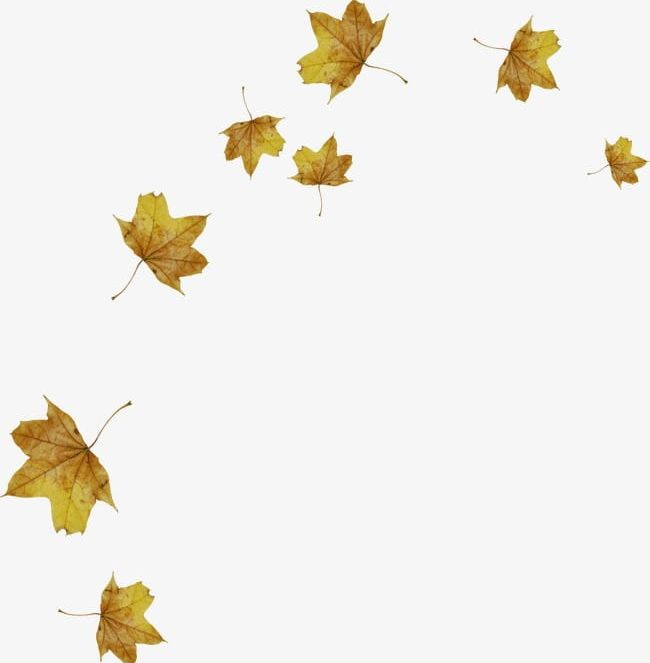 Scattered autumn leaves clipart graphic black and white Scattered Maple Leaves PNG, Clipart, Autumn, Country ... graphic black and white