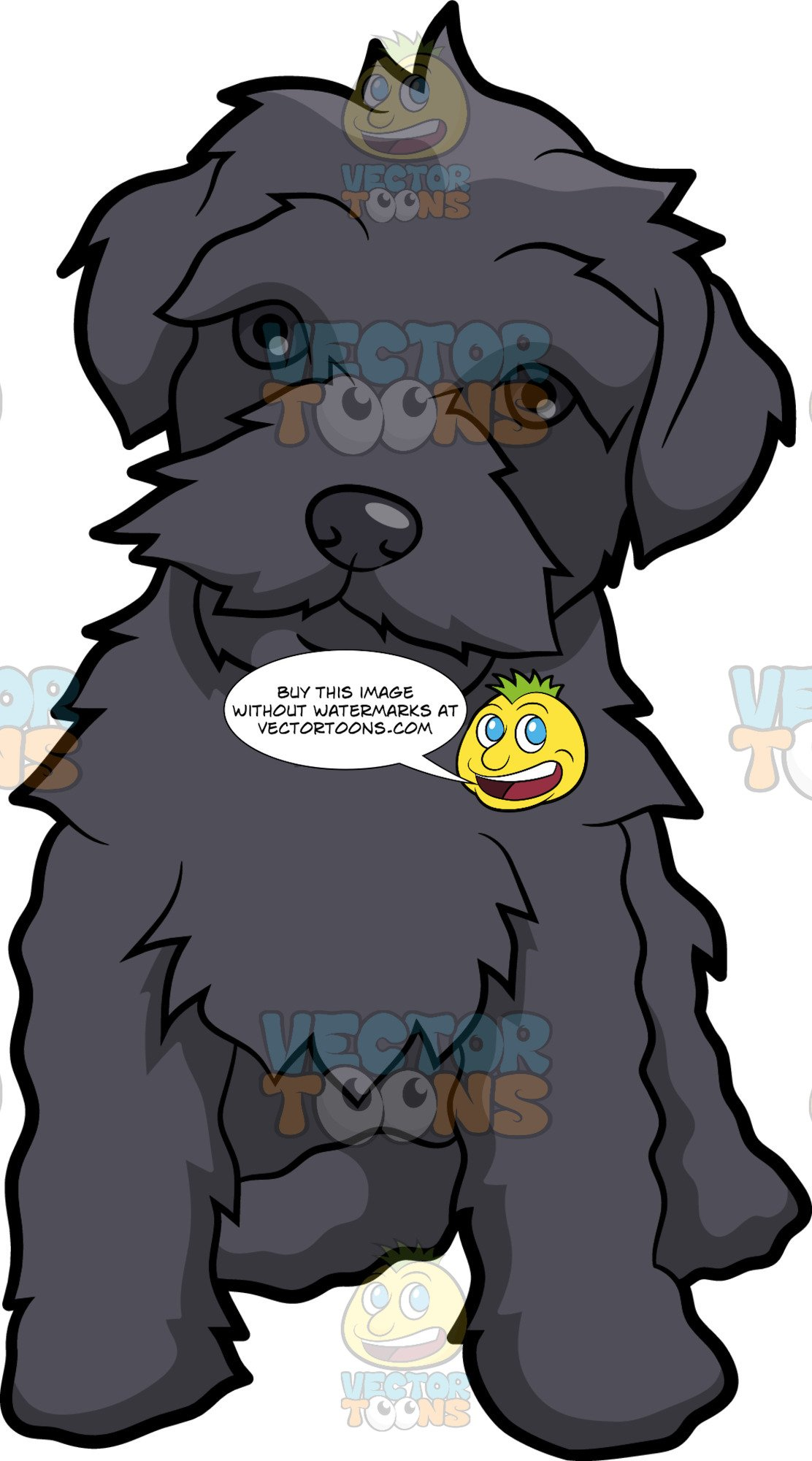 A Friendly Schnoodle Dog royalty free stock