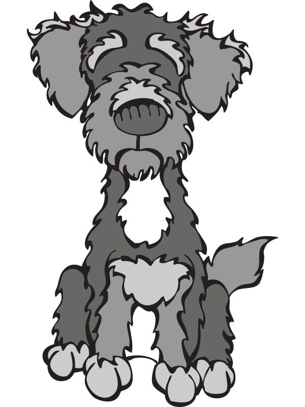 Schnoodle (Schnauzer x Poodle) - love this mix of dog breeds ... jpg freeuse