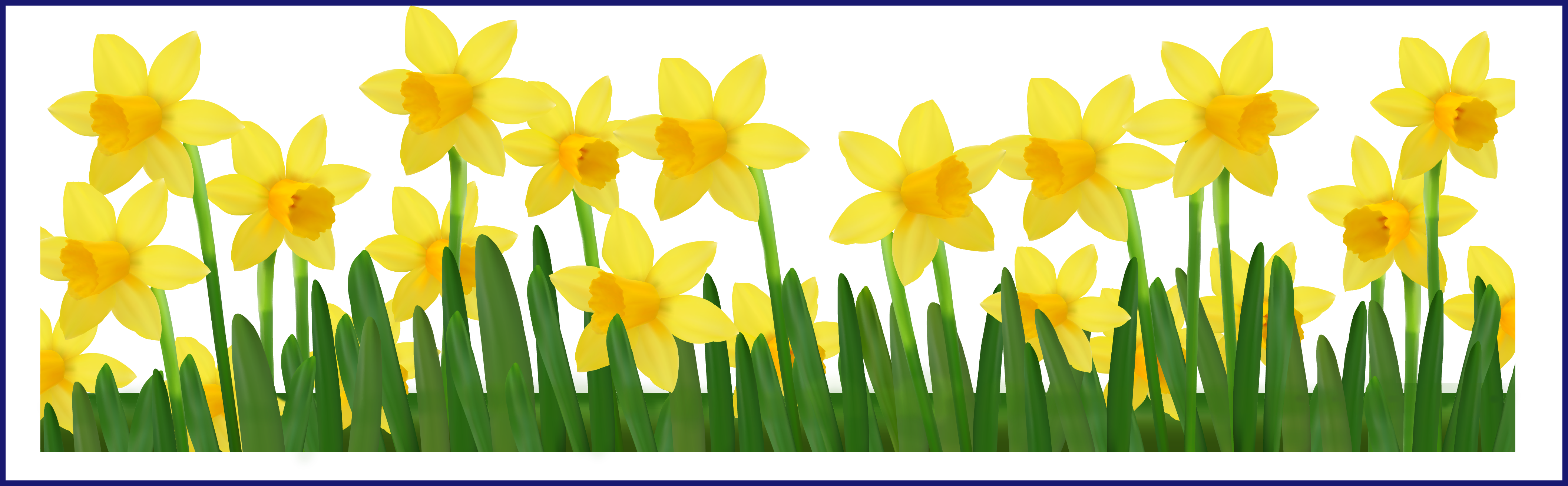 School garden clipart png transparent download Shocking Grass With Daffodils Png Clipart Picture Transparentes ... png transparent download
