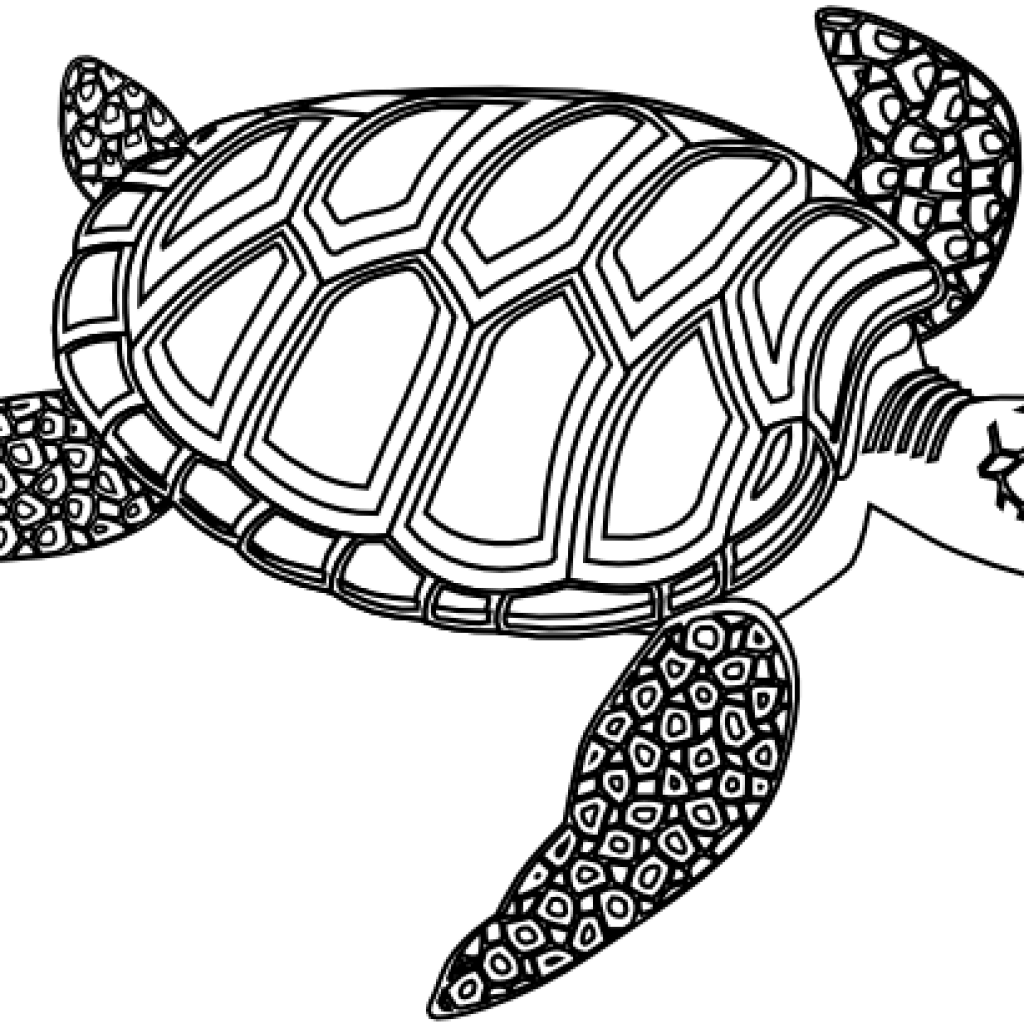 School turtle clipart picture black and white Sea Turtle Clipart Black And White winter clipart hatenylo.com picture black and white