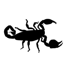 Scorpion silhouette clipart picture library Download silhouette clipart Scorpion Spider Clip art picture library