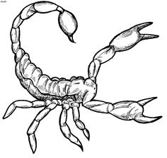 Scorpions clipart image black and white stock 7 Best Scorpion clipart images in 2012 | Scorpion, Clip art ... image black and white stock
