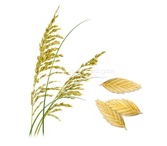 Sea oat clipart boarder clipart royalty free Sea Oats Clip Art image in Vector cliparts category at pixy ... clipart royalty free