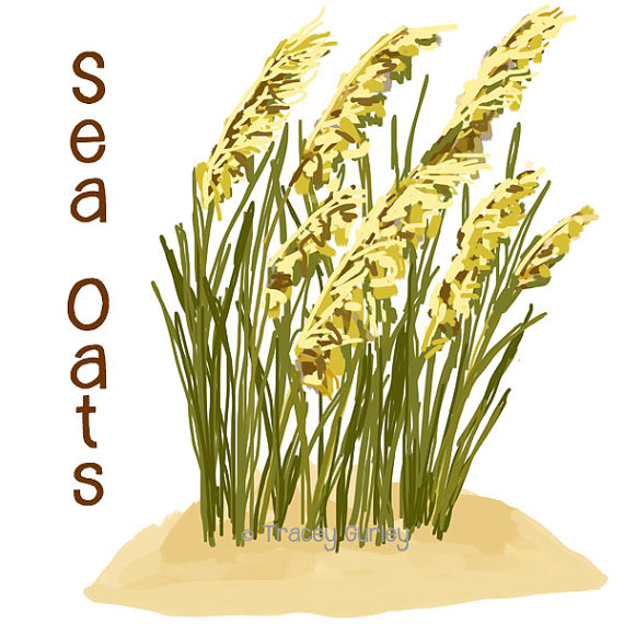 Sea oat clipart boarder graphic black and white stock Art, Sea, Oatmeal, Plant, Grass, Flower, Food png clipart ... graphic black and white stock