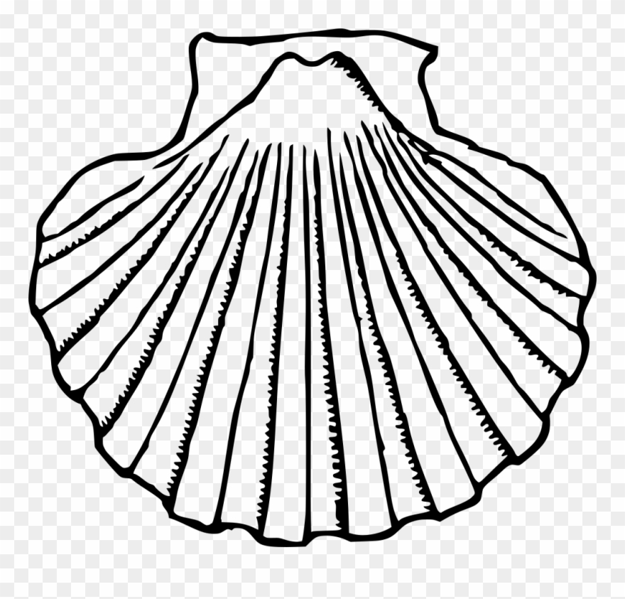 Sea shell clipart black and white picture black and white Sea Shell Clipart - Clip Art Black And White Shell - Png ... picture black and white