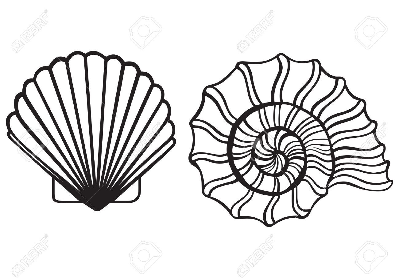 Sea shell clipart black and white clipart freeuse download Sea shell clipart black and white 1 » Clipart Portal clipart freeuse download