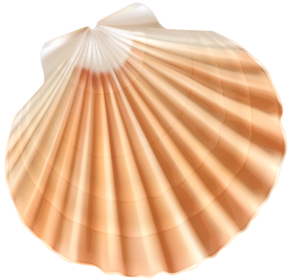 Sea shells star fishon beach clipart jpg freeuse stock Sea Shell PNG Clipart Image | ClipArt | Pinterest | Clipart images ... jpg freeuse stock