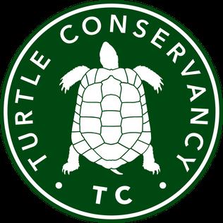 Sea turtle conservancy clipart picture transparent stock Turtle Conservancy - Wikipedia picture transparent stock