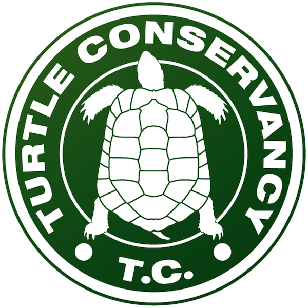 Sea turtle conservancy clipart freeuse Turtle Conservancy freeuse