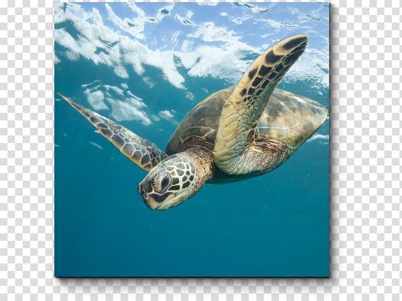 Sea turtle conservancy clipart graphic library download Loggerhead sea turtle Sea Turtle Conservancy Green sea ... graphic library download
