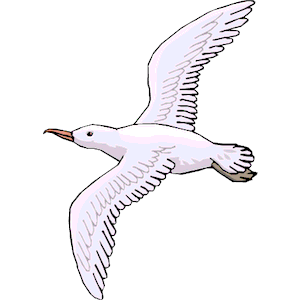 Seagull clipart free clip transparent stock Free Seagull Cliparts, Download Free Clip Art, Free Clip Art ... clip transparent stock