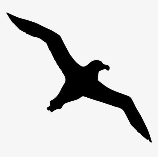 Seagull silhouette clipart picture transparent library Seagull Silhouette PNG, Clipart, Animal, Bird, Black, Black ... picture transparent library