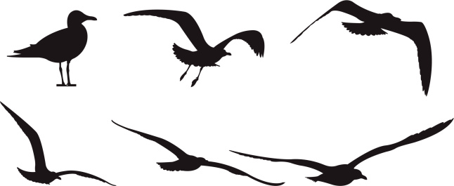 Seagull silhouette clipart black and white library Free Seagull Silhouette Cliparts, Download Free Clip Art ... black and white library
