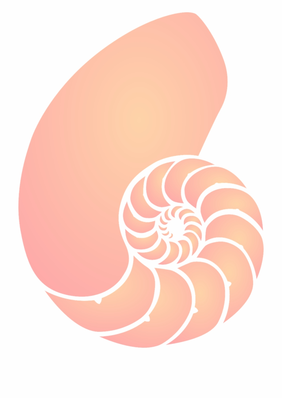 Seashell clipart png clipart black and white Clip Transparent Shell Sea Orange Pink Spiral Png Image ... clipart black and white