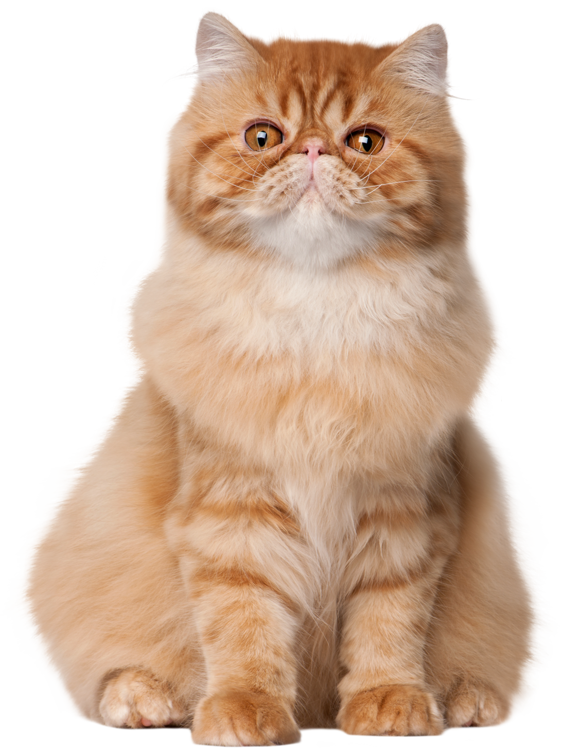 Seated cat clipart vector transparent download Armchair Sitting Cat Image Pictures Up Images - scalabeyond.com vector transparent download