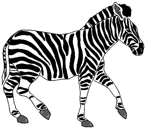 Zebra images clipart