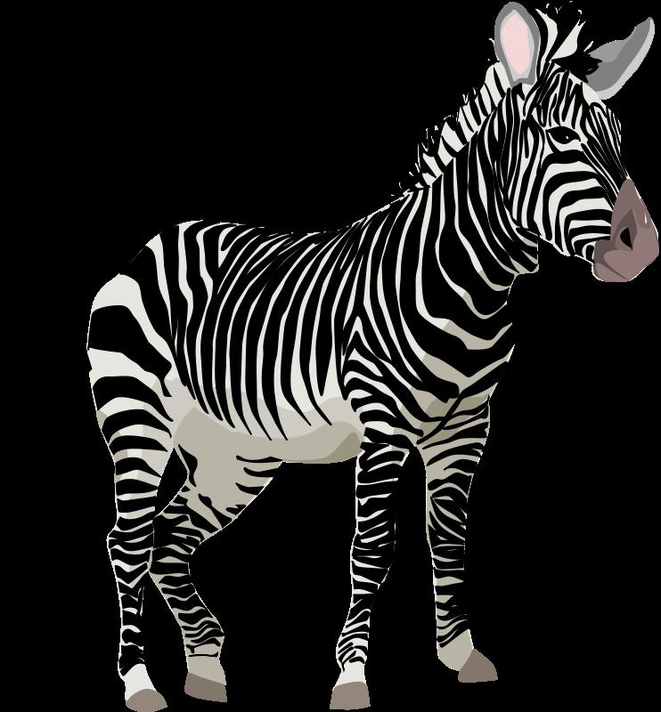 Zebrq clipart svg Zebra Clipart | Zoo Safari Jungle Rainforest Zebras ... svg