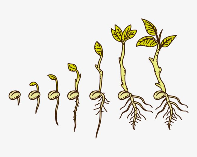 Seed growing clipart image freeuse stock Hand Drawn Cartoon Plants Growing Up   Books Worth Reading ... image freeuse stock