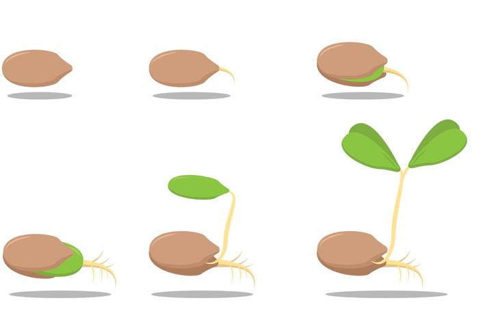 Seed growing clipart svg library download Growing Seed Vectors - Download Free Vectors, Clipart ... svg library download