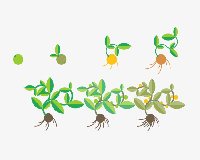 Seed growing clipart graphic royalty free library Seeds growing clipart 5 » Clipart Portal graphic royalty free library