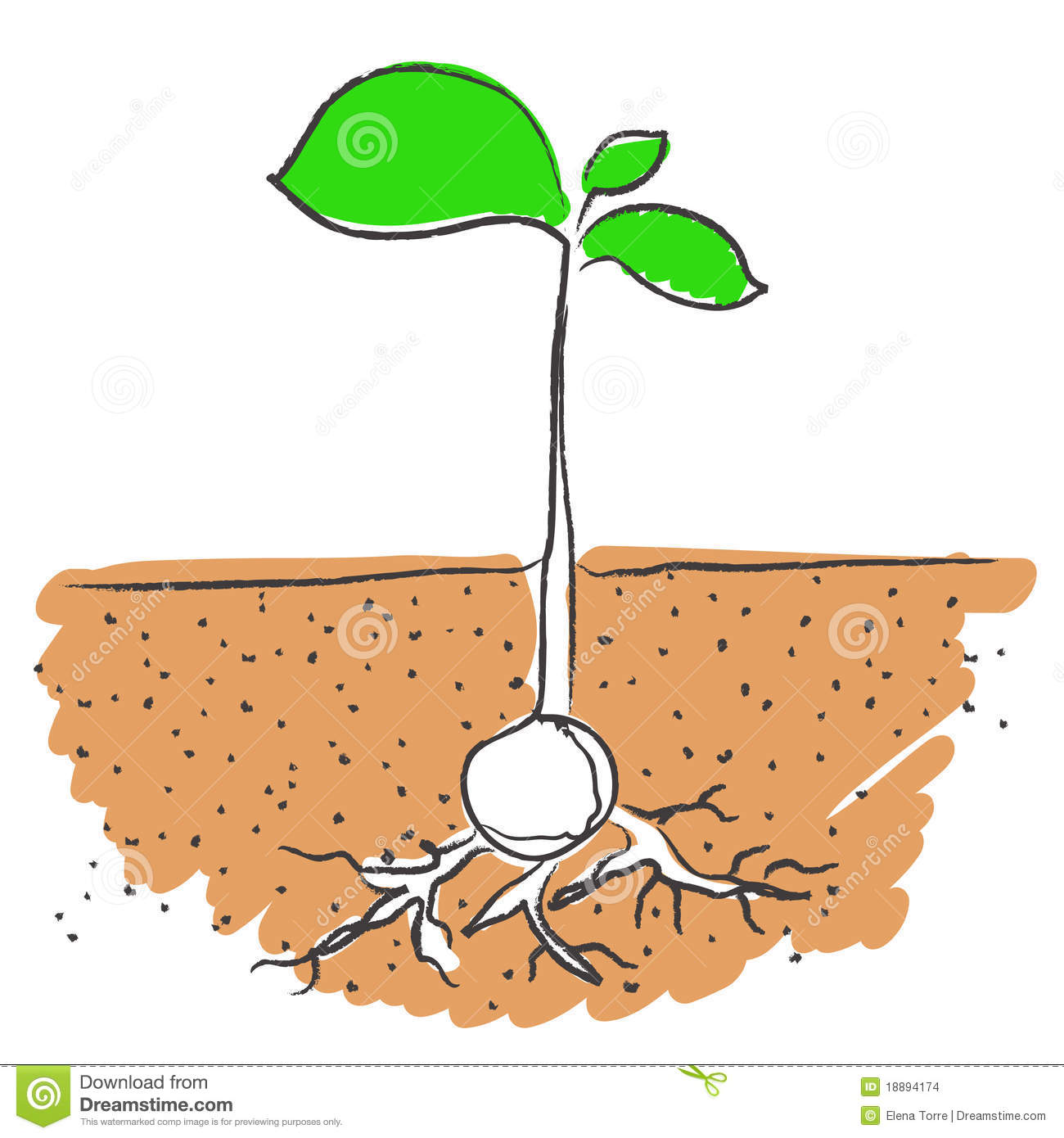 Put seed in dirt clipart clip art free stock 15 Growing Plant With Roots Vector Images - Seed Growing ... clip art free stock