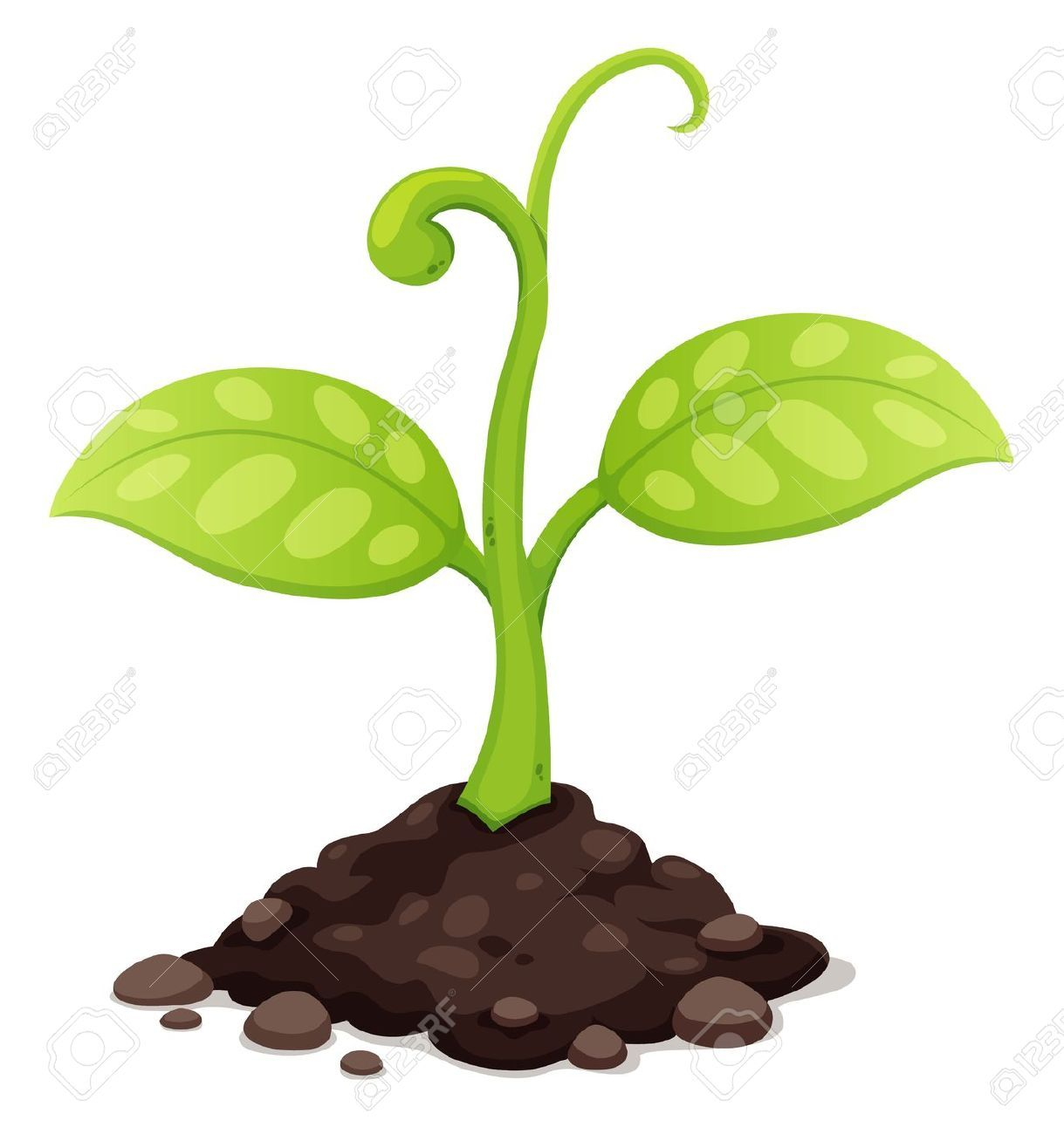 Plant grow clipart vector download Seed Growing Images, Stock Pictures, Royalty Free Seed ... vector download