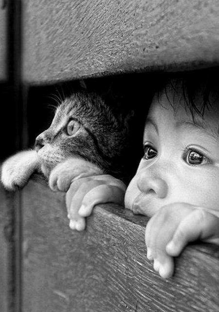 Seeing friend clipart black and white photography picture black and white library Aw the litle kitty kat so cute :) (Imagine me saying that in ... picture black and white library