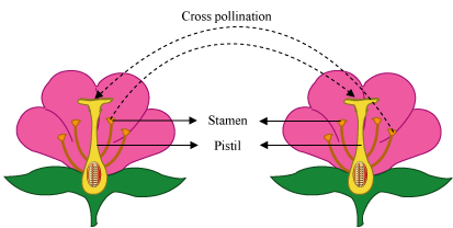 Self pollinating flower clipart jpg black and white stock Reproduction (1.4) - NEW WEBSITE EJBIOATDIO.WEEBLY.COM jpg black and white stock