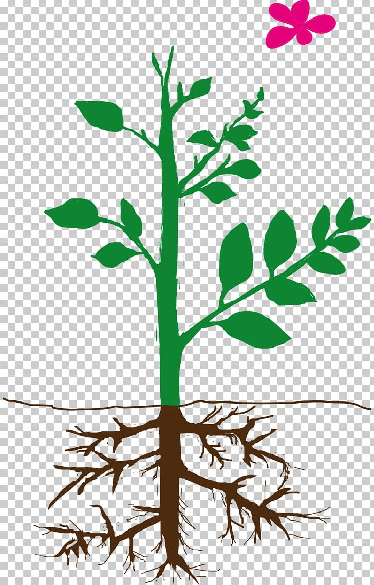 Self pollinating flower clipart svg royalty free stock Plant Stem Self-pollination Equisetum PNG, Clipart, Artwork ... svg royalty free stock