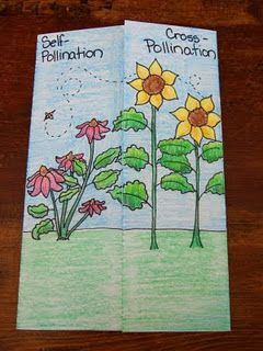 Self pollinating flower clipart clip art royalty free library cross-pollination and self-pollination foldable | Science ... clip art royalty free library