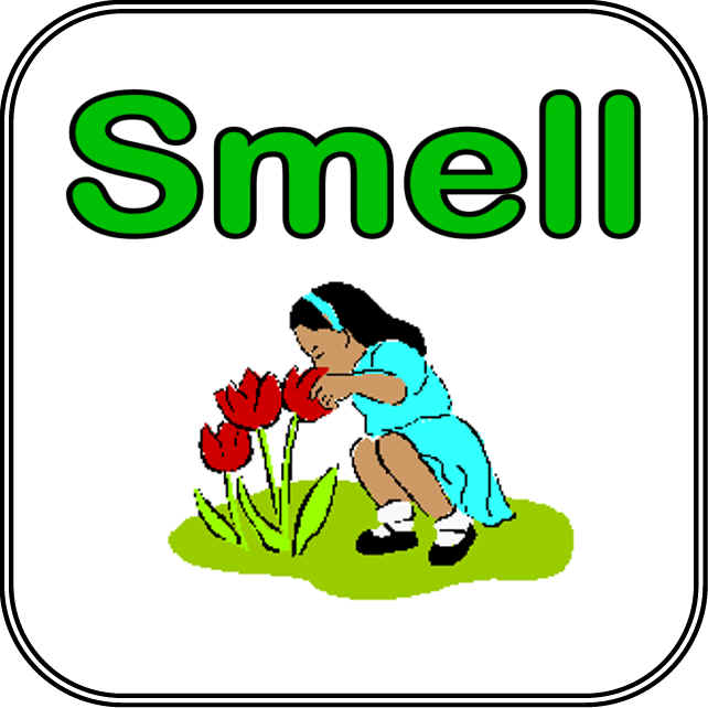Sense of smell clipart clip download Download things we can smell clipart Olfaction Sense Clip ... clip download