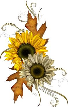 Shabby fall clipart graphic Free Country Sunflower Cliparts, Download Free Clip Art ... graphic