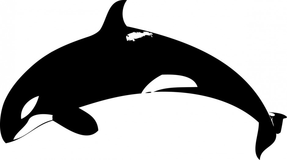 Shamu clipart graphic transparent library Shamu clipart 3 » Clipart Portal graphic transparent library