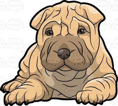 Shar clipart image transparent stock Pei clipart 20 free Cliparts | Download images on Clipground ... image transparent stock