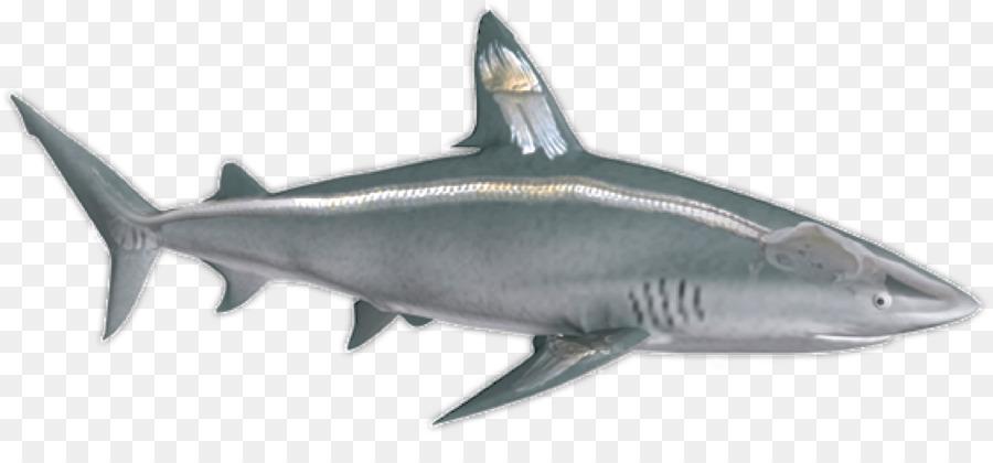 Shark cartilage clipart banner transparent Great White Shark Background png download - 1600*717 - Free ... banner transparent