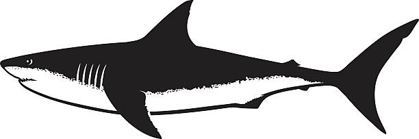 Shark clipart black png freeuse download Top 60 Great White Shark Clip Art Vector Graphics And ... png freeuse download