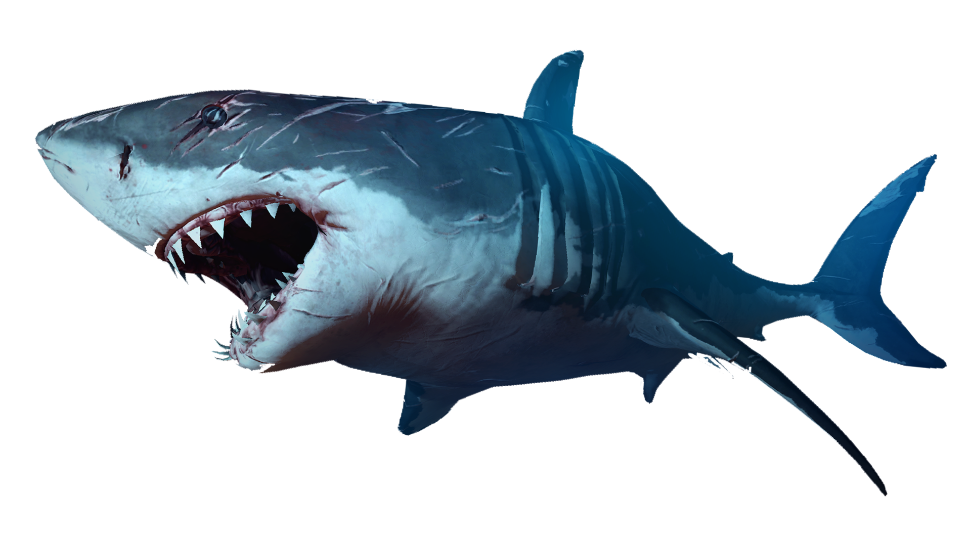 Shark eating fish clipart picture royalty free Pin by Arkhael Greed on Animales | Pinterest | Shark and Animal picture royalty free